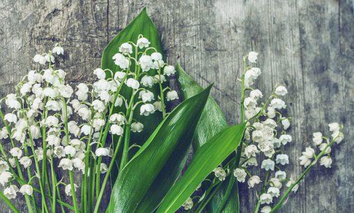 Afbeelding van kleine bloeiende bloemen in natuur